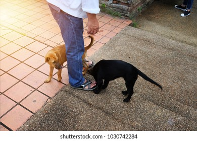 The man standing with brown and black stray dog around. Soft sun shine light flare