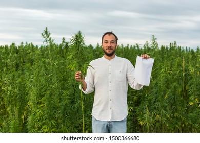 Man standing in marijuana CBD hemp plants field and holding and bud and paper. Hemp paper