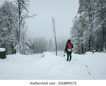 man standing in the snow winter forest back view