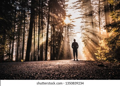 A man standing in sunrise spring rays peaking through forest foliage and road leading through forest. Amazing warm early spring morning scene. Peaceful, magical and quiet natural scene.
