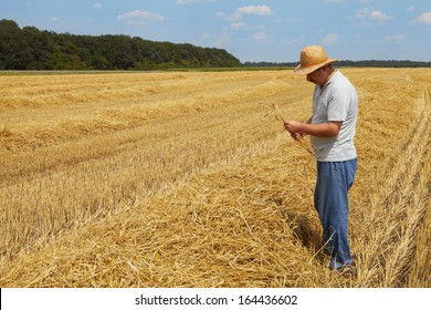 The man stands on a field with wheat. Rich harvest