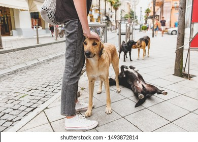 A man stroking a homeless dog on a city street surrounded by other stray dogs. Сoncept of sympathy for poor animals and a call for adoption of homeless dogs