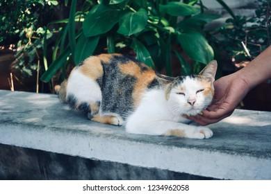 man stroking a small kitten