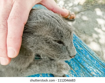 Man stroking street homeless cat on a bench