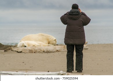 Man takes a photo of a couple of exhausted Polar Bears on a sandspit