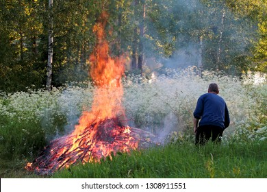 A man taking care of bonfire in bright midsummer eve. White flowers are blooming in evening light