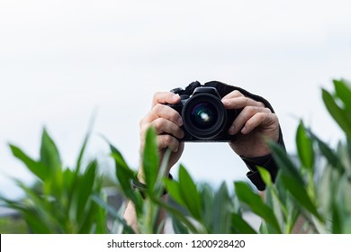 Man taking pictures from behind the bushes, camera in his hands