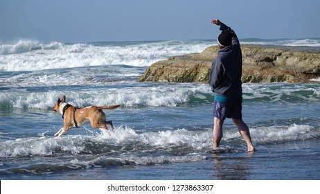 Man throwing ball or stick for his dog at the beach