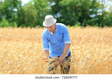 Man touching wheat spikelets in field