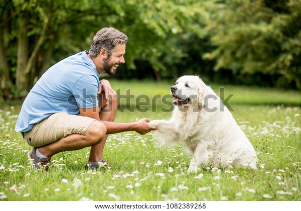 Man training Golden Retriever dog in the park