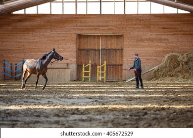 The man training his horse in manege