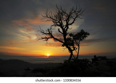 Man and trees silhouettes at sunrise in Brazil