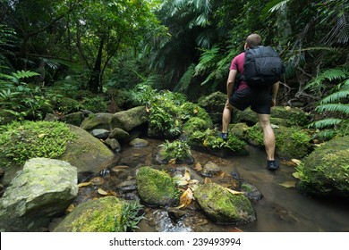 Man trekking through untouched tropical Jungle stream deep in the Rain Forest of Iriomote-jima, Okinawa, Japan