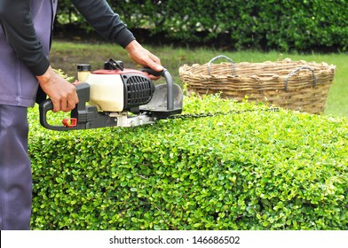 A man trimming hedge with trimmer machine