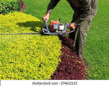 A man trimming shrub with Hedge Trimmer