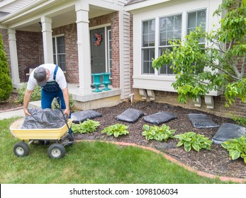 Man unloading bags of mulch into a flowerbed in front of his house ready for mulching around the plants to control weeds and moisture