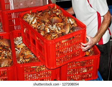 Man unloading crates of fresh Spanner Crabs (Ranina ranina), also known as Kona Crab and Red Frog Crab, at a Fishing Co-op. in Queensland, Australia.
