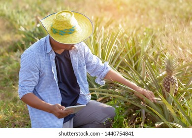 A man to use check read or analysis a report of cassava in plantation farm on tablet computer,agriculture concept.