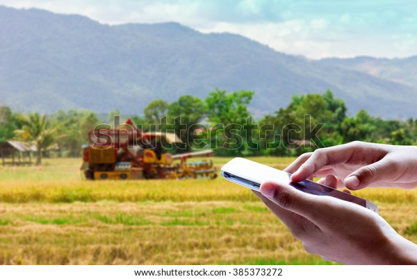 Man use mobile phone, blur image of harvested rice field as background.