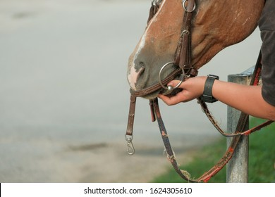 man use steel bit and bridle on horse for steering and controlling. riding and equestrian concept.