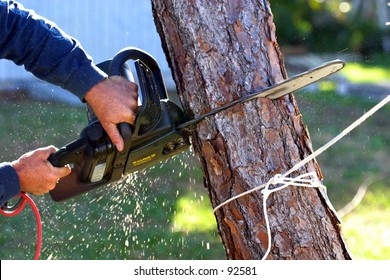 A man uses an electric chainsaw to cut a dead tree down after a hurricane.
