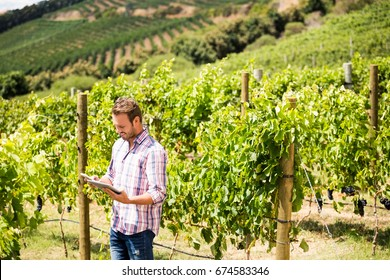 Man using phone and tablet at vineyard on sunny day