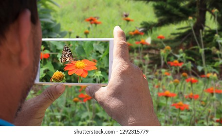A man using a smart phone to taking pictures of butterfly on the flowers.