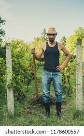 Man in the vineyard with the hay fork