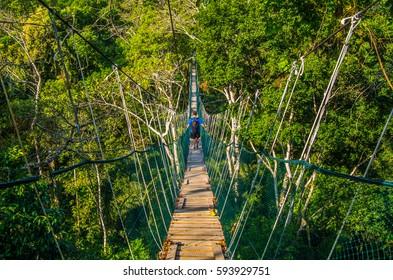 Man walking above the jungle through a wood bridge