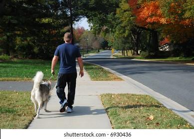 Man walking alaskan malamute in residential neighborhood