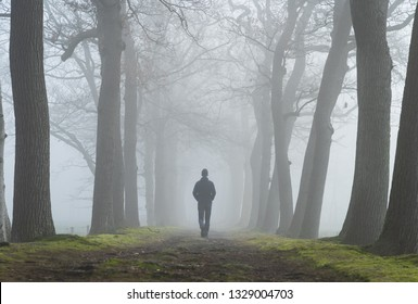 A man walking alone in a lane of trees on a foggy, spring morning. Drenthe, Holland.