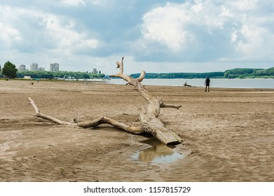Man walking beside a strange branch/Danube island weird dislocated tree branches against a man walking on the water edge.