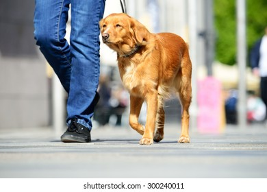Man walking the dog in the city