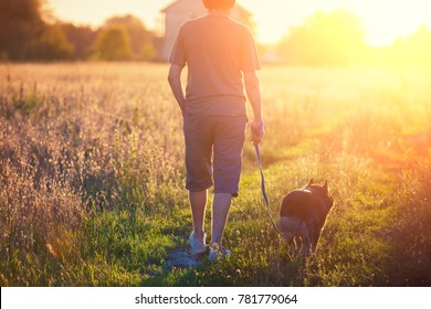 Man walking with a dog in the field at sunset. The man holding a dog on a leash
