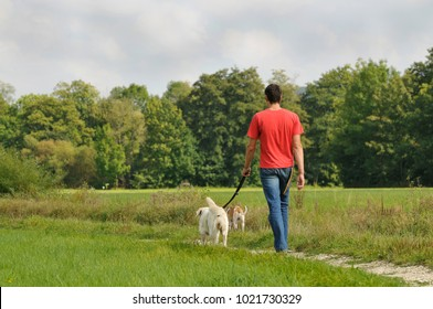 Man is walking with dogs