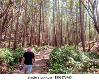 A man walking his dog through a beautiful forest along an empty trail.  Enjoying a great vacation during retirement.