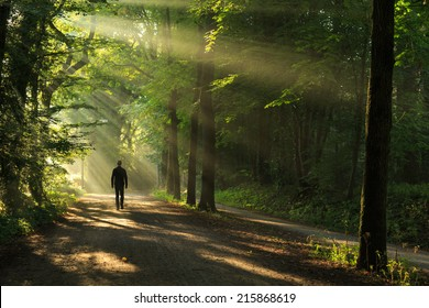 Man walking in a lane with the sunlight breaking through the trees.