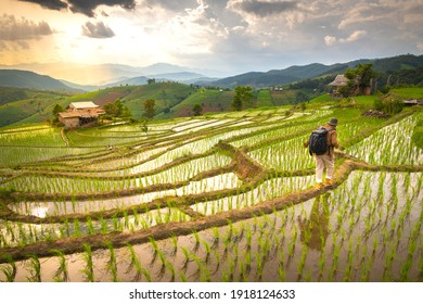 The man is walking on the rice field At papong pian house, Chiangmai,Thailand.