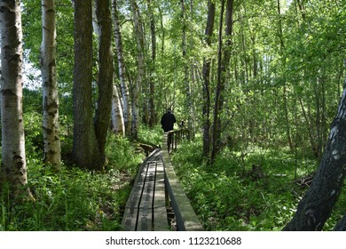 Man is walking on a wooden footbridge in a deciduous forest at the swedish island Oland