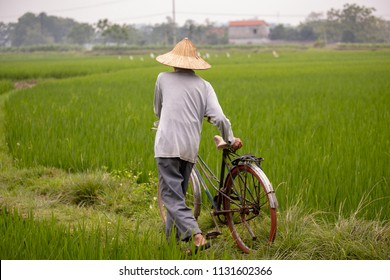 Man walking and pulling his bicycle in a rice field, Vietnam