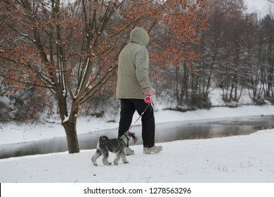 the man walking with a puppy schnauzer dog in cloudy winter day