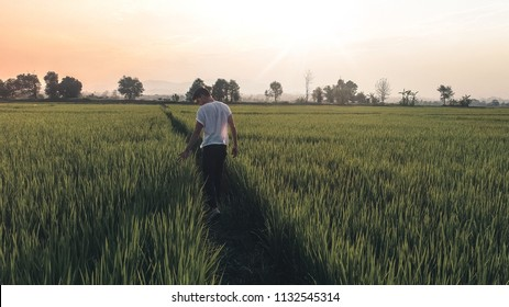 Man walking in a rice field. Man from the back on a long country path. Green field in the summer, Farmer walking through a green  field on morning day, Young man walking in the field, alone.