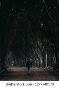 Man walking through the trees in Dark Hedges, Ireland lookalike. Spooky and misty winter path.