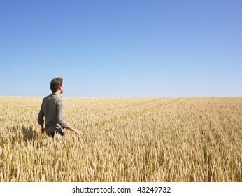 Man walking through in wheat field. Horizontally framed shot.