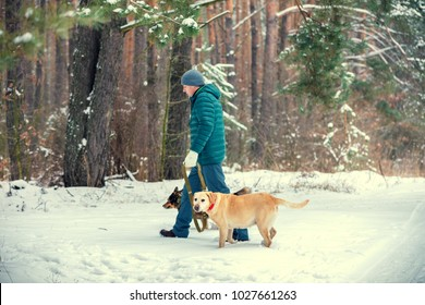 A man walking with two dogs on leashes in the pine snowy forest in winter back to camera