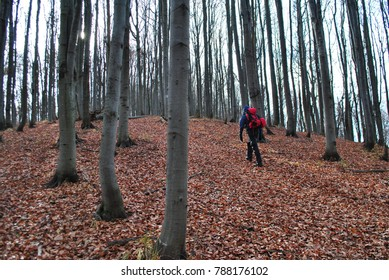 Man walking in the woods with backpack hiking in the fall season lots of leaves on the ground and trail between trees in the forest in the mountains. Human walking and traveling on trip. Sport boy.