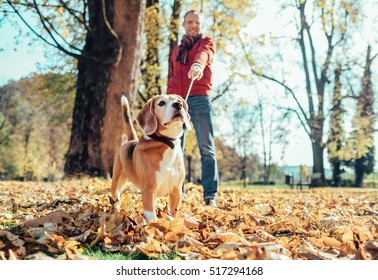 Man walks with dog in autumn park at sunny day