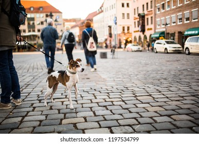 A man walks with a dog in the city center. A lonely dog with beautiful eyes looks at passersby in a square in Germany.