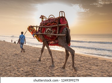 A man walks with his domestic decorated camel, looking for rider on the Puri sea beach . Camel riding on the beach is a popular tourist activity at Puri. Orissa.