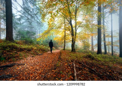 Man walks into the magical morning foggy forest landscape with colorful autumn season leaves.